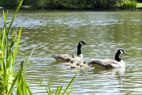 Braid Park in Tiverton