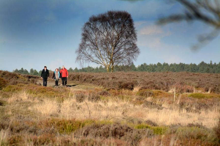 Walking the dog at Cannock Chase