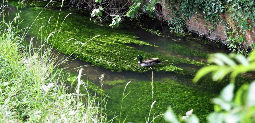 Berkeley, Wye Dene, High Wycombe, Duck, River, Local Area