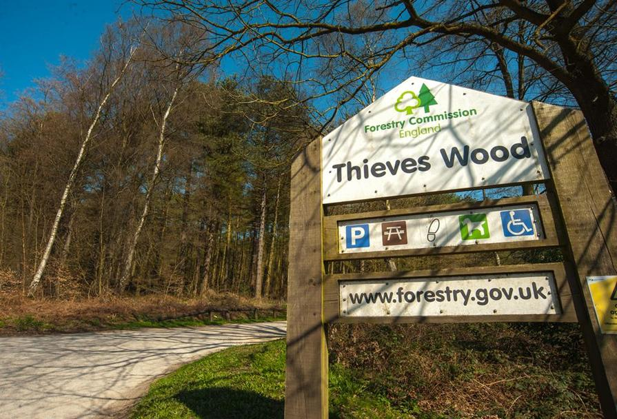 Thieves Wood, Mansfield
