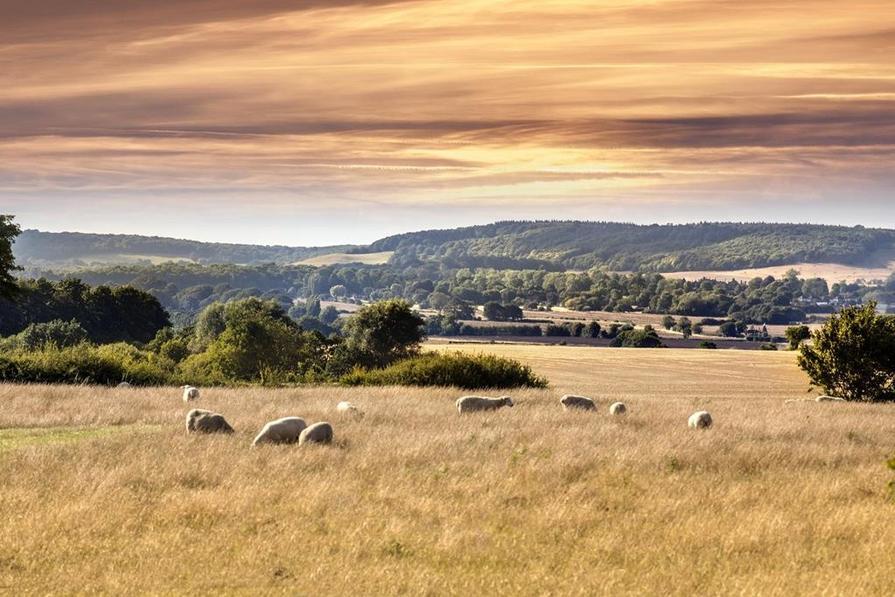 Countryside near Faversham