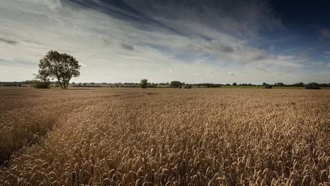 Gislingham, Suffolk IP23