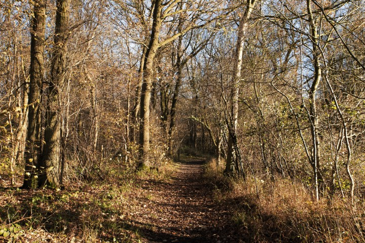 Wolves Wood