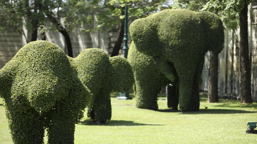 Topiary featured on the garden bucket list