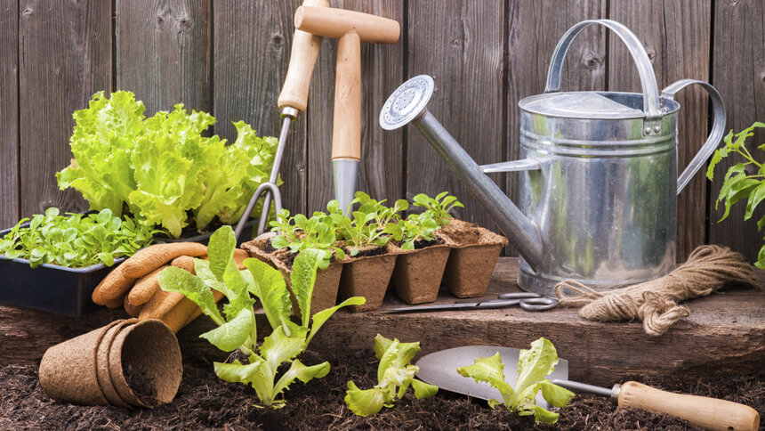 Having a vegetable patch is on the bucket list