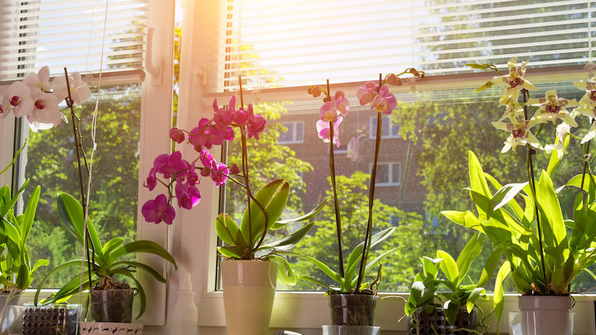 Plants add a homely feel