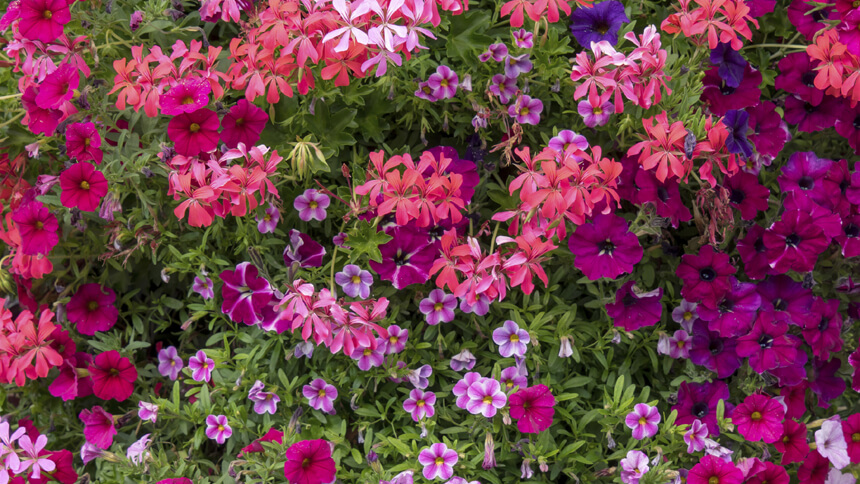 Flowers that bloom all year are popular