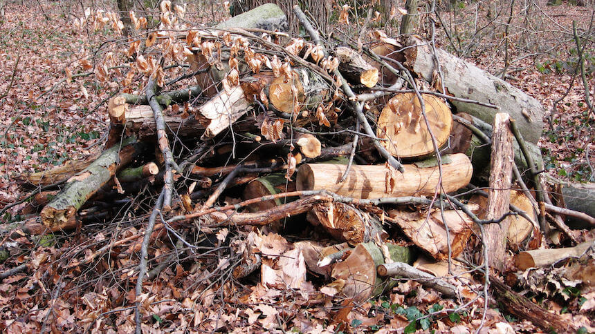 Logs will provide shelter for frogs and hedgehogs