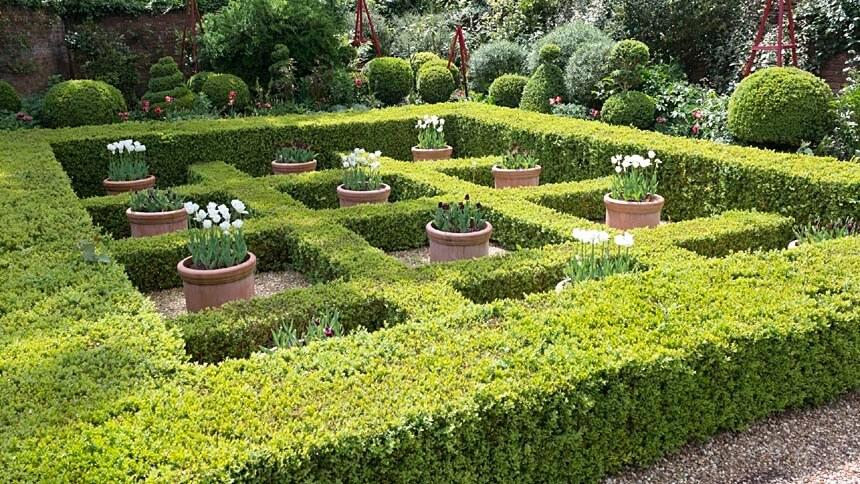 Box garden design