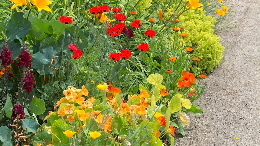 Mixed flower borders with warm colours