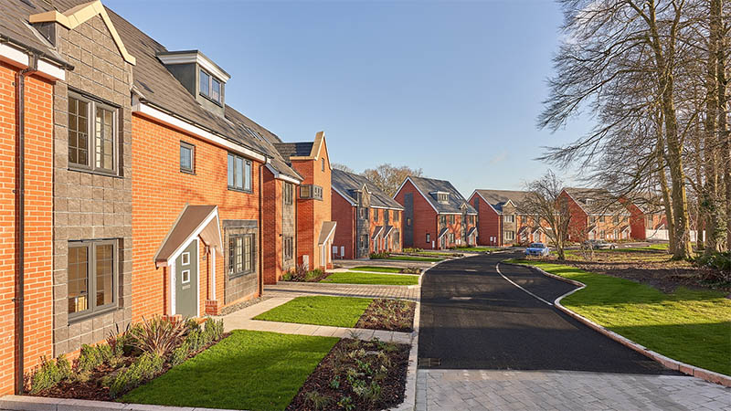 Pine Trees (Taylor Wimpey)