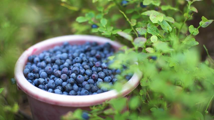 Grow your own berries