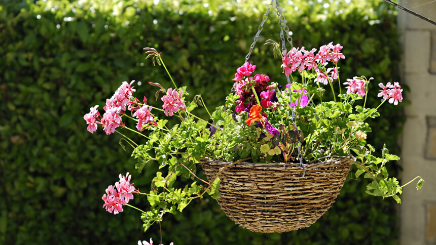 Hanging baskets have huge appeal