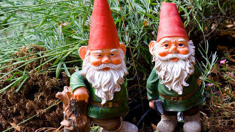 Gnomes aren't a popular choice for gardens