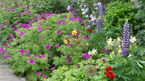Mixed flower borders