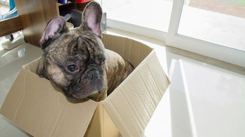 Keep your dog happy when moving home