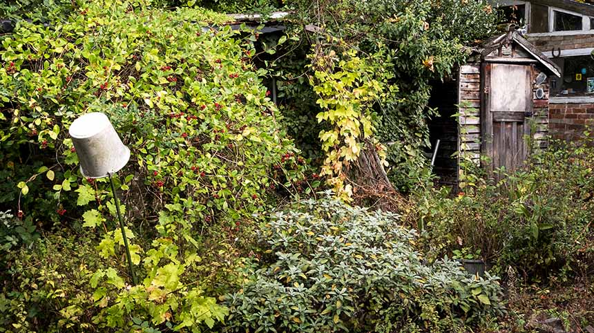untidy garden (Simon Annable)