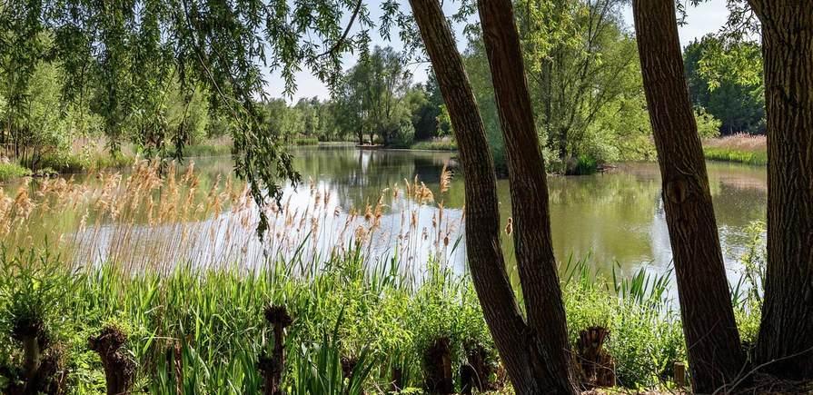 St Edward, Green Park Village, Local Area, Pond