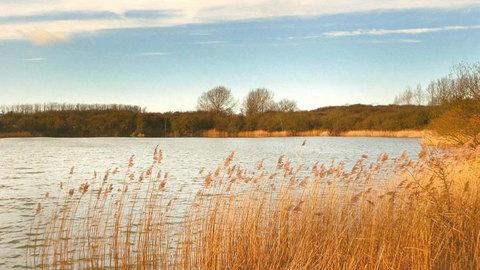 Hedgerows @ Willow Lake in Milton Keynes